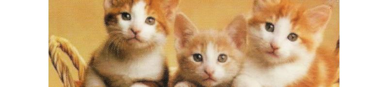 carte à message avec des animaux
